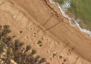 3_2cmRGB_Env_Turtle-Track-Mapping_Barrow-Island